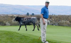 Author's golf pal, Allen Schauffler, uncertain where to turn after a large bovine suddenly appears on the 10th tee at Alta Lake GC in north-central Washington.