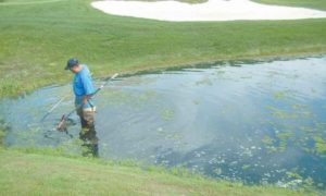 Copper & Algaecides: Making Informed Decisions | Golf Course