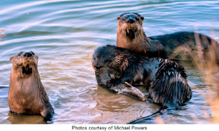 Naples Lakes Country Club Otters Photo Courtesy of Michael Powers